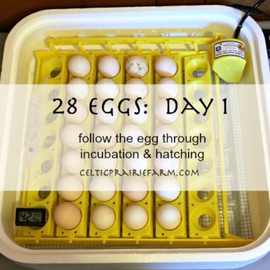 28 Eggs, will your choice survive?