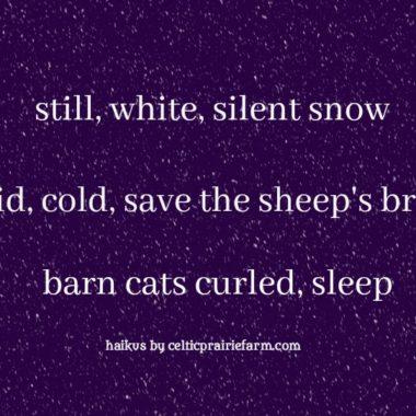 Haiku 1